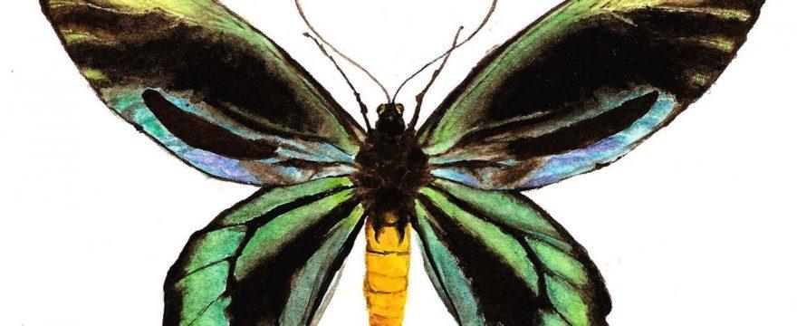 5 Mariposas en Peligro de Extinción (Actualizado 2018)