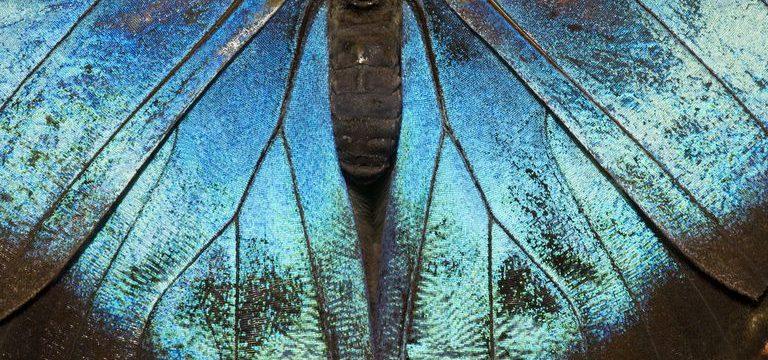 Parábola Sueño de la Mariposa de Chuang-Tzu