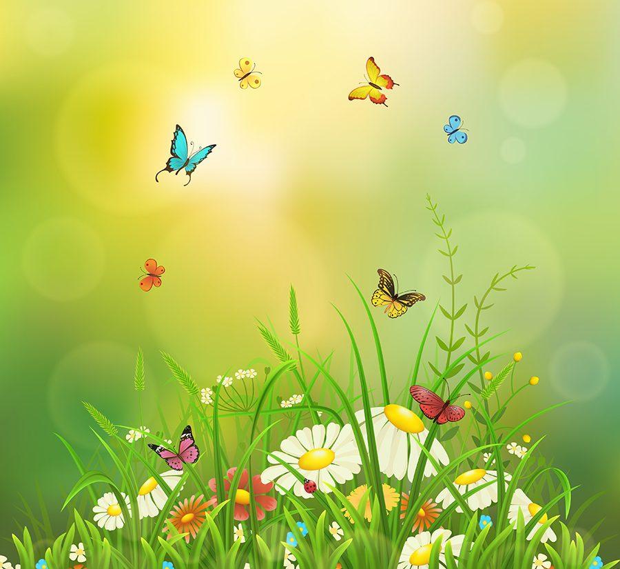 Mariposas Magicas