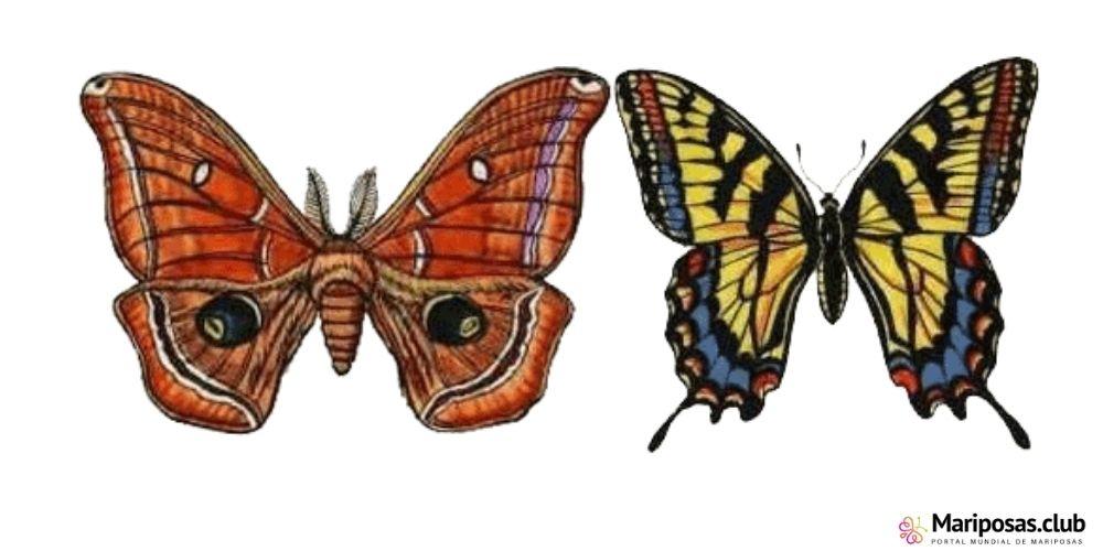 Diferencias entre una mariposa y una polilla