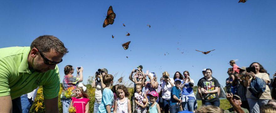 Lanzamiento de Mariposas en Bodas