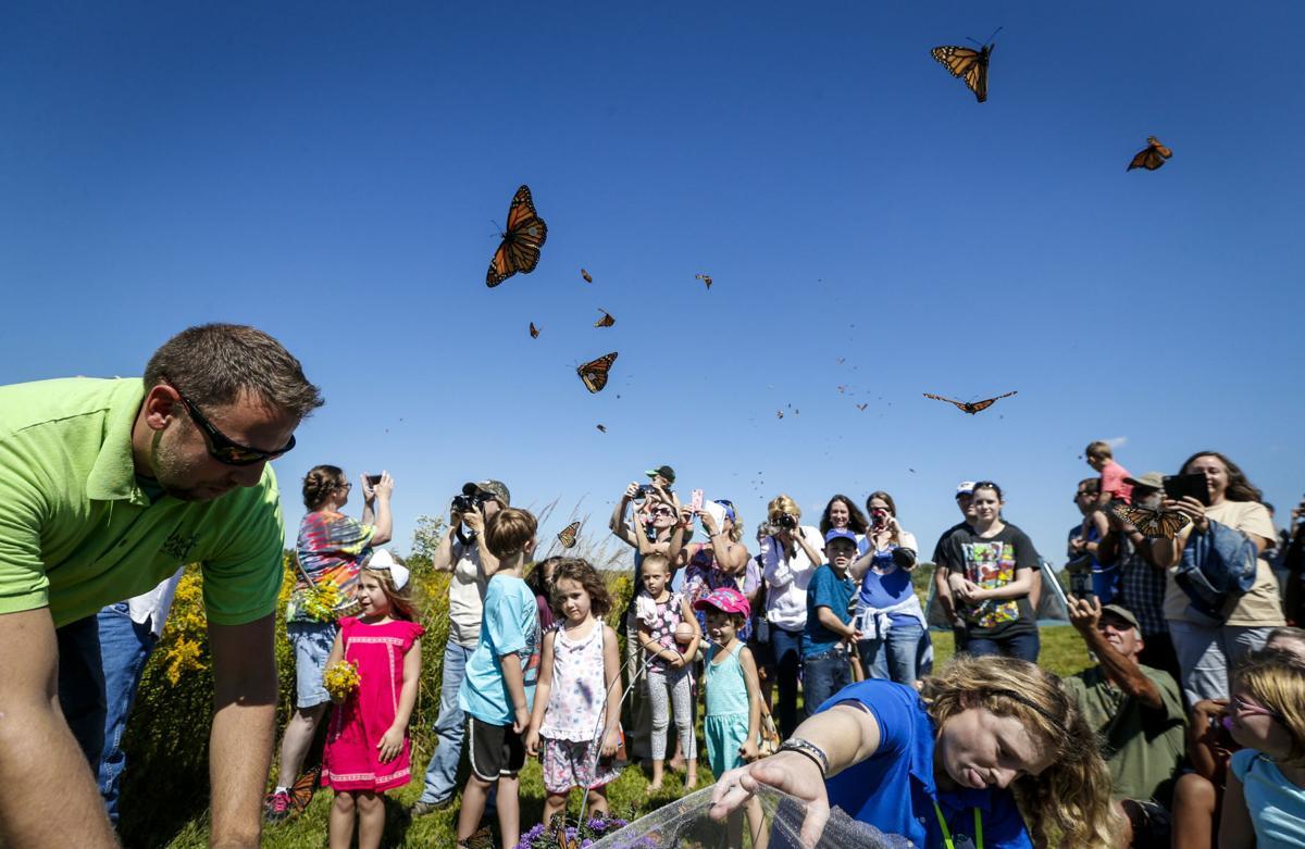 Lanzamiento de Mariposas