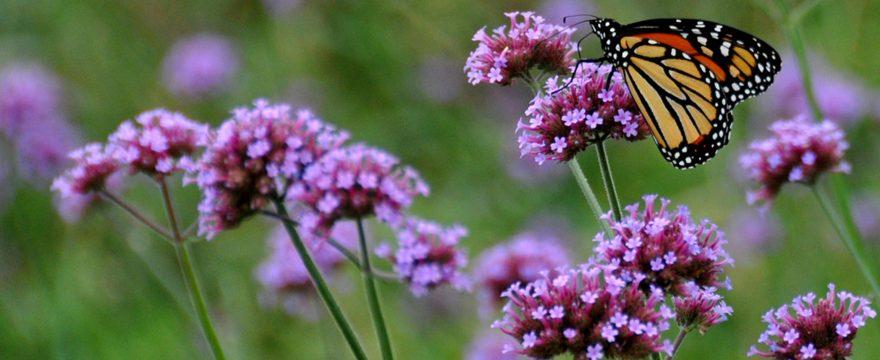 Principales características del Hábitat de las Mariposas