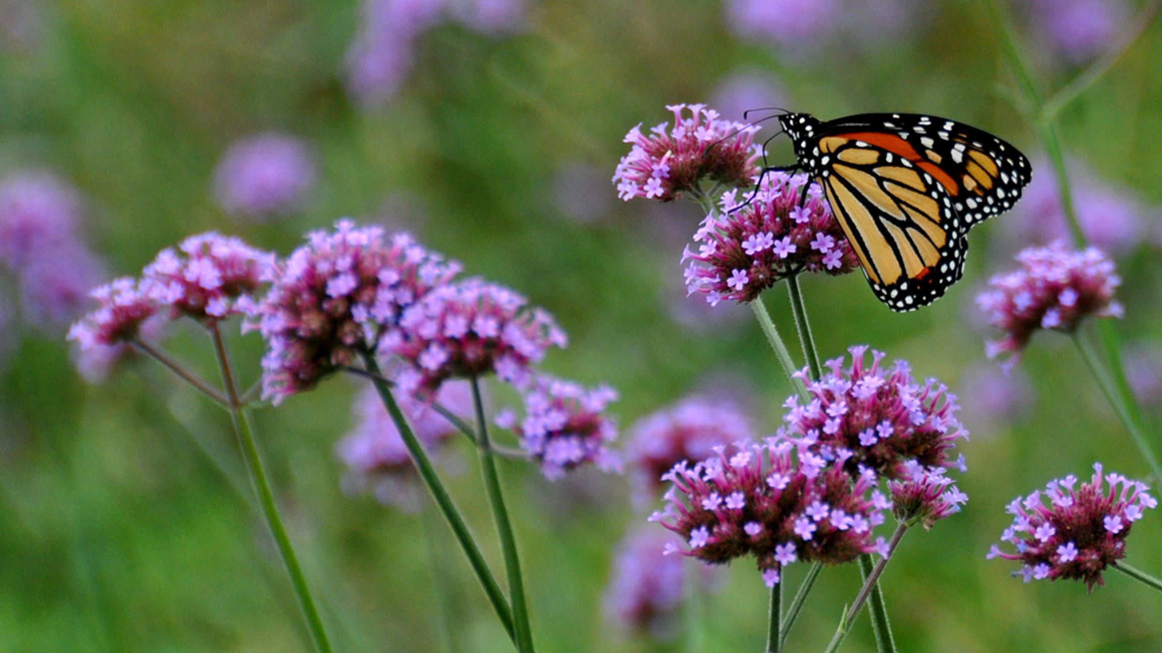 Habitat de las Mariposas
