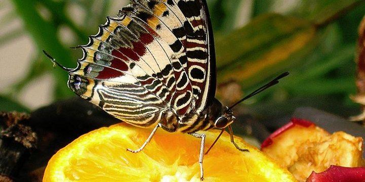 Comportamiento de la mariposa: Comiendo y charlando