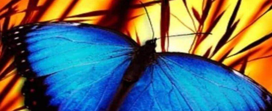 Kinesiología de la Mariposa: mantener el calor