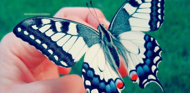 Cómo atraer Mariposas: 6 consejos infalibles