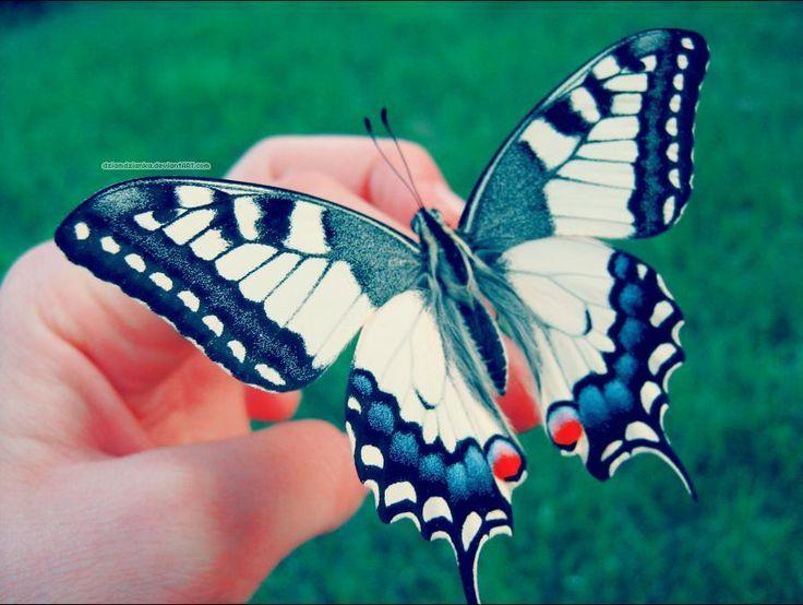 atraer mariposas a tu jardin