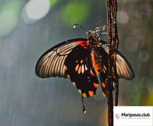 Mariposas bajo la lluvia