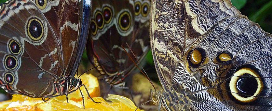 Qué comen las Mariposas y por qué es tan importante?