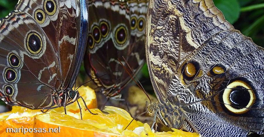 Mariposas Comiendo