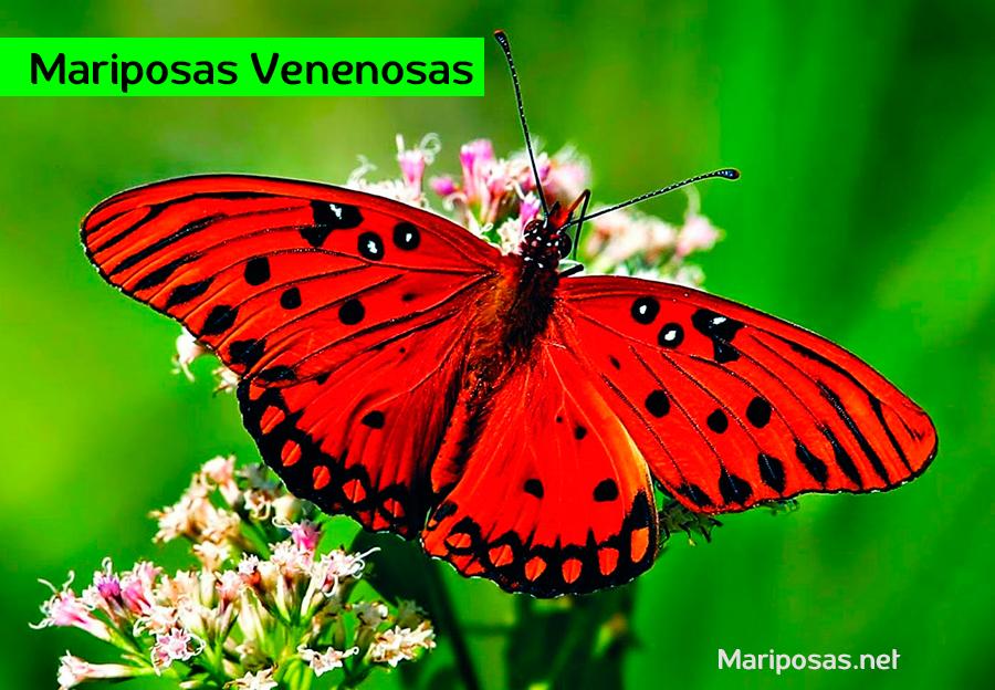 Mariposas Venenosas