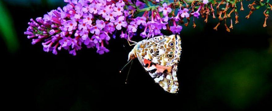 14 Mariposas únicas por su belleza
