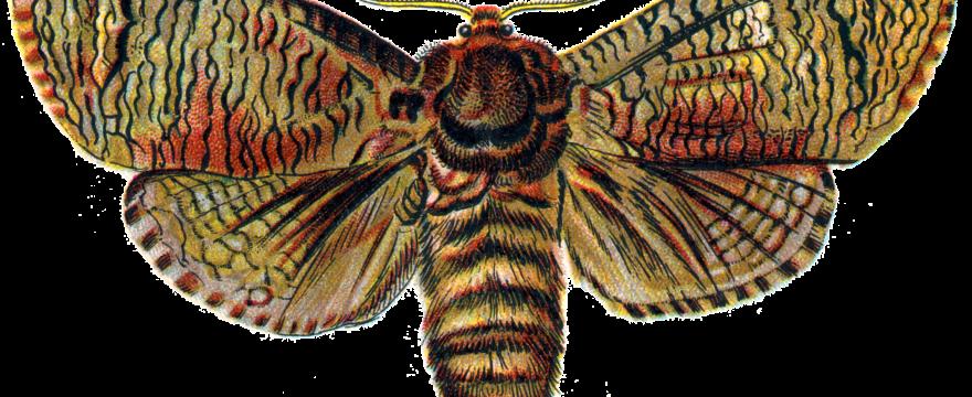 Top 5 Mariposas de España: la península ibérica y sus bellezas