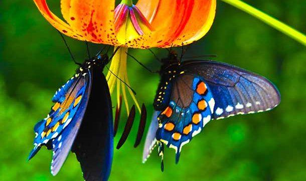 Los mejores 5 cuentos sobre mariposas