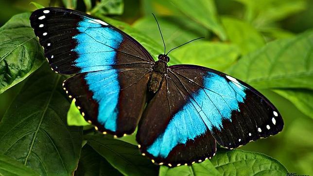 Leyenda de la Mariposa