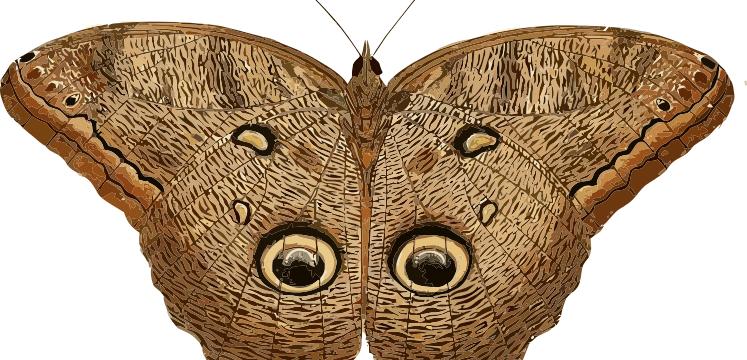 Top 5 Mariposas Argentinas: vive el encanto único de estas mariposas argentas