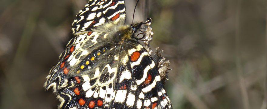 Las 10 mariposas más conocidas del mundo