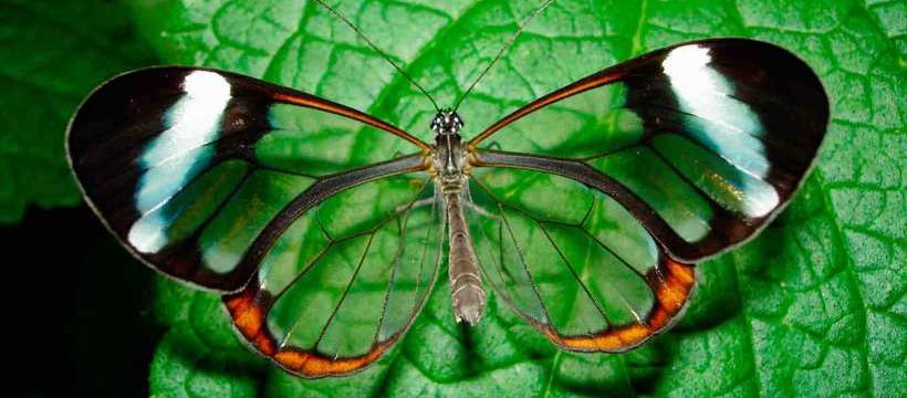 Mecanismos de defensa de las mariposas y orugas