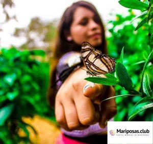 La felicidad de las Mariposas