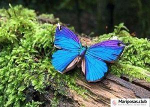 sueños y mariposas