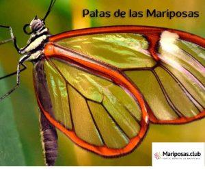 Partes de las mariposas